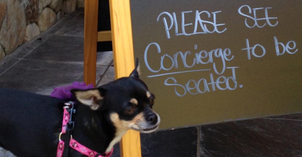 Alexander Valley Wineries Dog Friendly